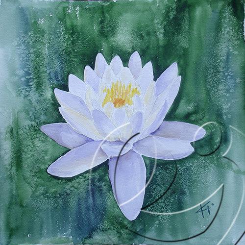 012051 Lotus for Agnes