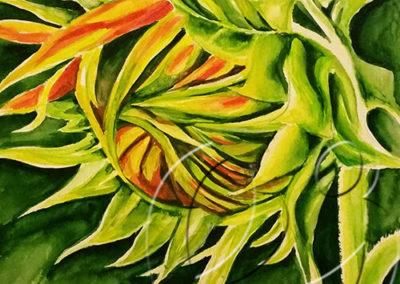 015090 Closed sunflower