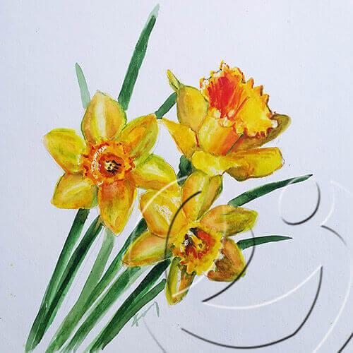017166 Daffodils