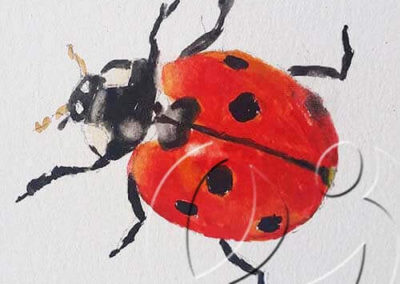 017174 Ladybug 1