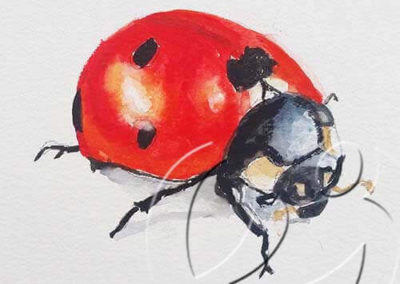 017174 Ladybug 2