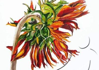 017202 Red sunflower back sw