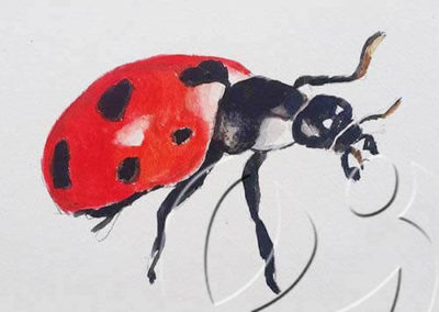 017174 Ladybug 3