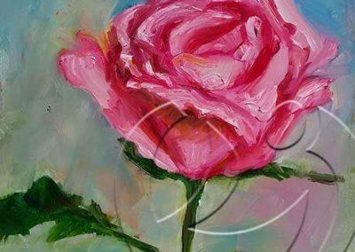 017196 Rose