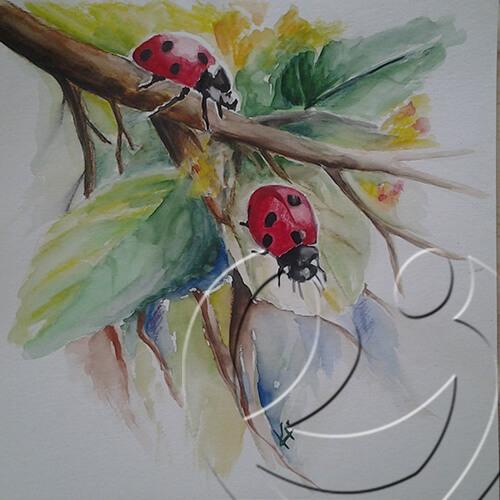 013069 Ladybirds