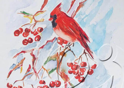 017152 Cardinal and berries for Edward