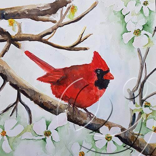 019262 Cardinal on a dogwood tree