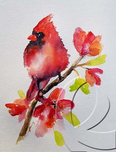 019264 Cardinal on a tree smooth
