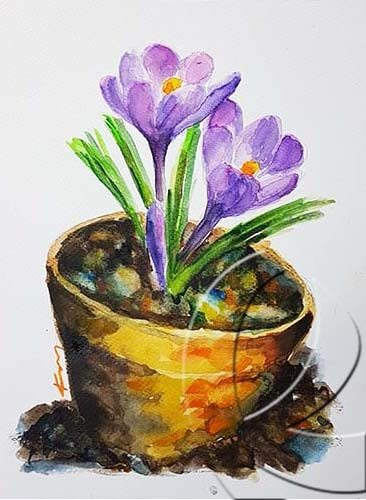 019269  crocus in a pot