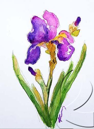 019286 iris
