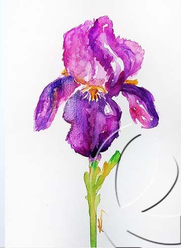 019287 iris