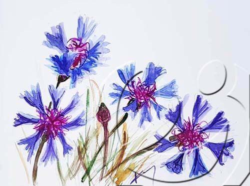 019324 Cornflowers