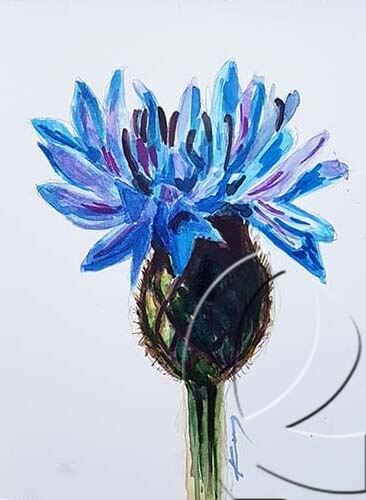 019325 Big head cornflower