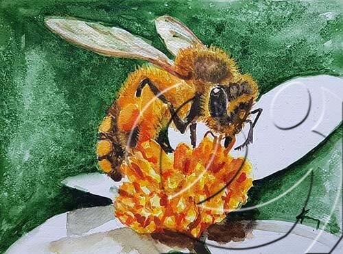 019329 Bee