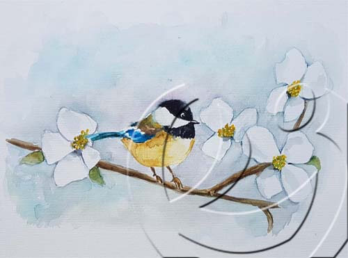 019333 Chickadee on dogwood