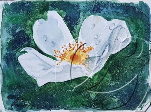 019335 rosehip flower