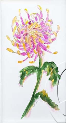 019341 chrysanthemum