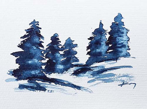 020352 blue pine trees